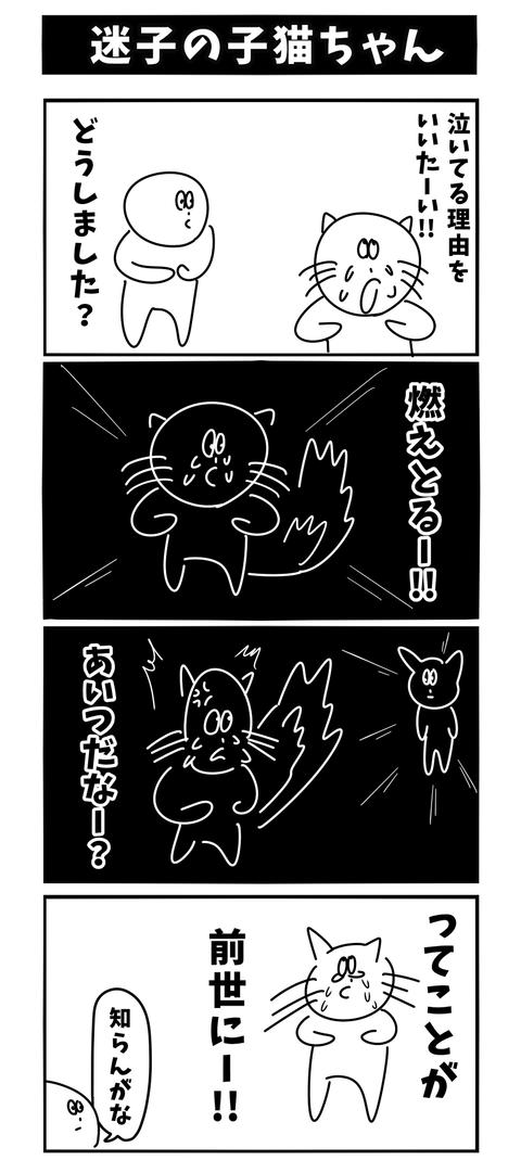 迷子の子猫ちゃん