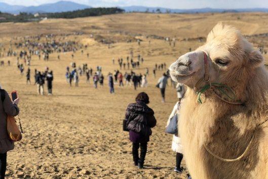 ポケモンGO、鳥取砂丘のイベントで十数億円の経済効果をもたらす