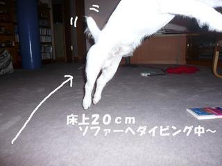 f9027735.jpg