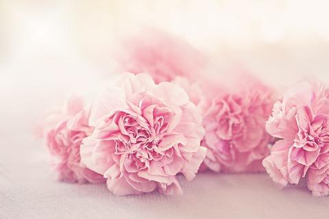 flowers-1349826_1920