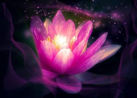flower-3103636_640