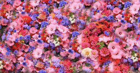 flowers-74598_640