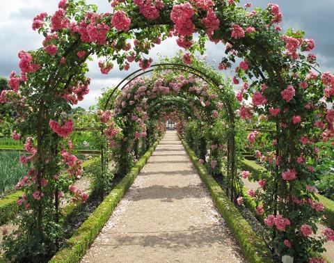 roses-2245612_1920