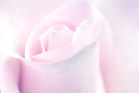 rose-2629518_1280