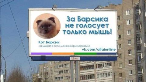 cat-poster-barnual-barsik
