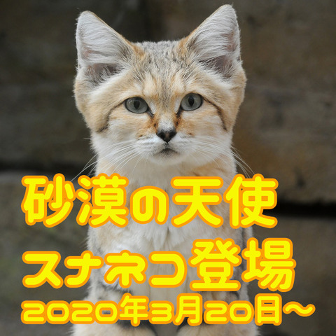 スナネコ2-thumb-710x710-5488