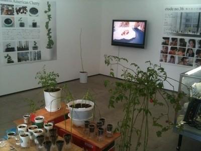 TWS_garden