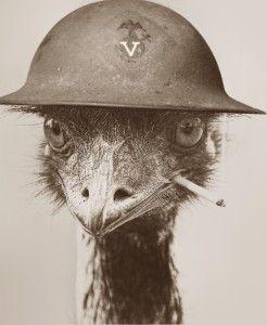 Emu_Soldier