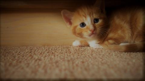 Fear Cat