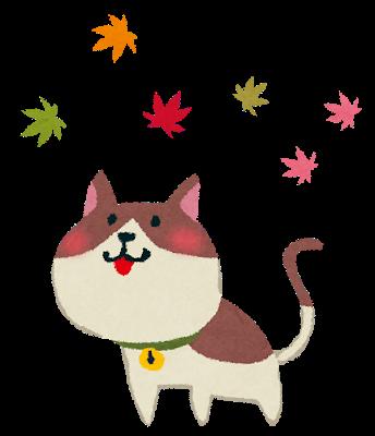 kouyou_cat (1)