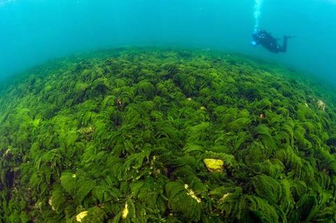 green-slime-baikal-1
