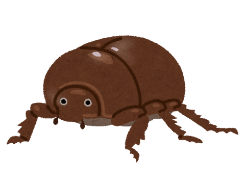 bug_kabutomushi_mesu_brown