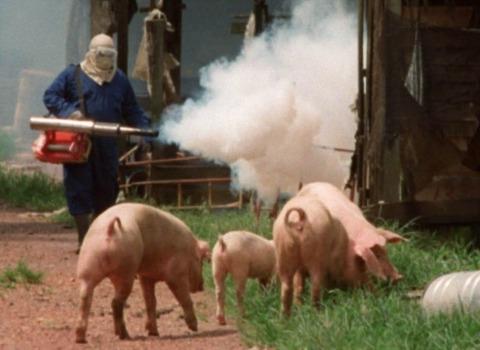 1526977541_nipah-virus-outbreak-malaysia