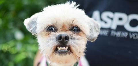 dog-care_dog-bite-prevention_main-image