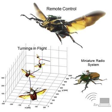 Beetle-Cyborg