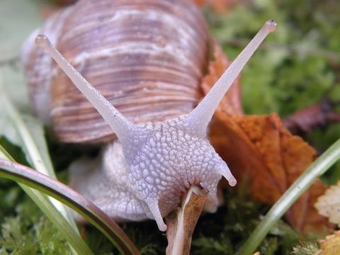 snail-193611_640
