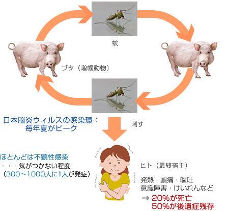 je_vaccine_001