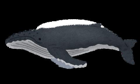 whale_06_zatoukujira