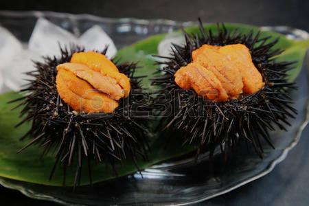 37800822-sea-urchin