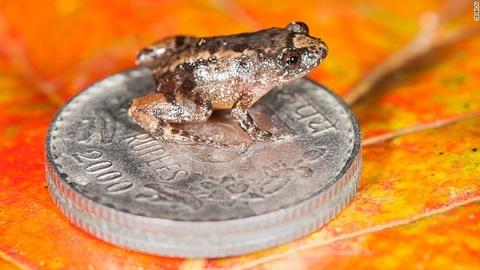 170222174545-03-miniature-night-frog-in-india-exlarge-169
