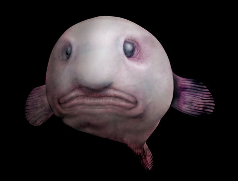 deepsea3