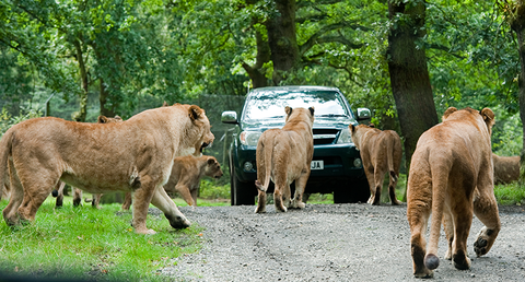 Knowsley Safari Park Half Term October Blog(1)