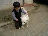 颯太と犬・・