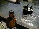 ペンギンかわいいねぇ・・