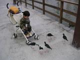 鳥が寄ってきた・・