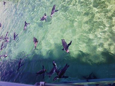 葛西水族館 ペンギン