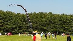 稲毛海浜公園の連凧3