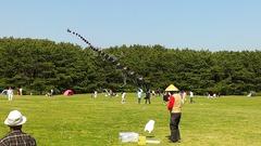 稲毛海浜公園の連凧2