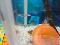 ザリガニとザリガニの抜け殻、小魚残り4匹