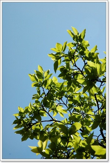 souther_20110429f