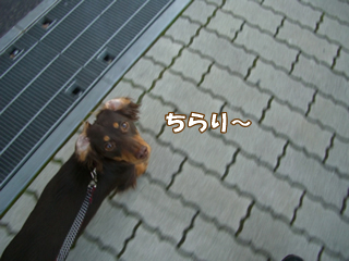 souther_20081203i