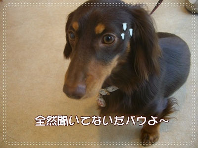 souther_20090413g