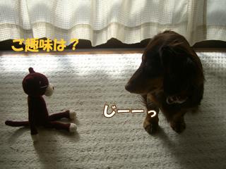 souther_20081229e