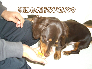 souther_20081128g