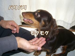 souther_20081128e