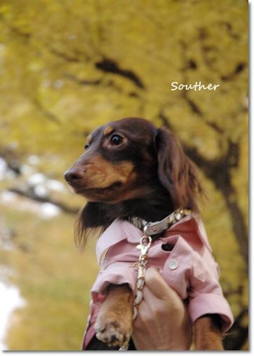 souther_20091130e