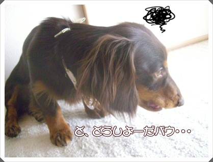 souther_20090323e