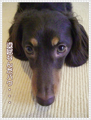 souther_20090528g