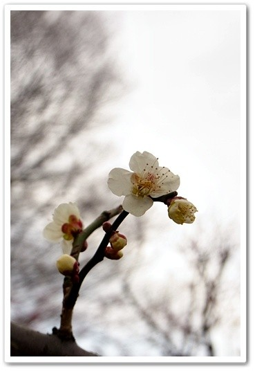 souther_20120331c