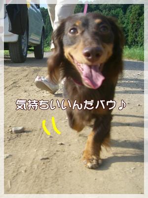 souther_20090831e