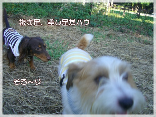 souther_20090909h