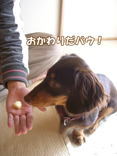 souther_20081204g