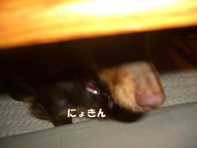 souther_20090123c
