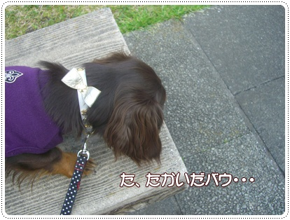 souther_20090328g