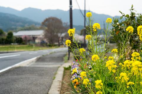 明日香村の春