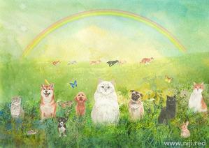 ペットロス-虹の橋絵本-猫イラスト